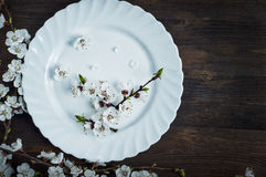 Ceramic white plate on a brown surface Royalty Free Stock Image