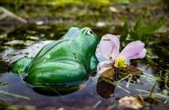 Ceramiczna żaba Zdjęcie Royalty Free