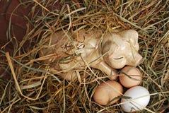 Ceramiczna świnia na sianie z jajkami Fotografia Royalty Free