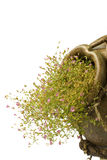 ceramiczne kwiatów grka menchie puszkują małego styl Obraz Stock