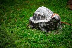 Ceramiczny żółw na gazonie Obraz Royalty Free