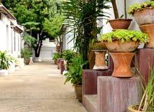 Ceramiczny garnek z kwiatami w ogródzie Obraz Stock
