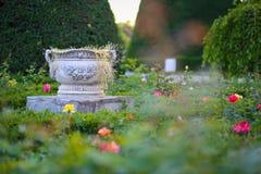 Ceramiczny kwiatu garnek otaczający róż roślinami przy parkiem róże, Timisoara zdjęcia stock