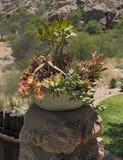Ceramiczny kwiatu puchar z różnymi sukulentami zdjęcie stock
