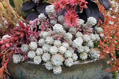 Ceramiczny plantator sukulenty Fotografia Stock