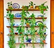 Ceramiczny z zielonym bluszczem, rówieśnika ogrodowy wystrój zdjęcia stock