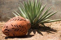 Ceramische decoratieve kruik en yucca Royalty-vrije Stock Foto's