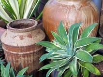 Ceramische Potten en Groene Struiken stock afbeelding