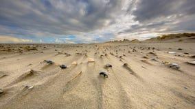 Cerastodermashells op wind geveegd strand royalty-vrije stock afbeeldingen