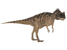 Ceratosaurus Stock Photos