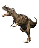 Ceratosaurus dinosaur attacking. Ceratosaurus dinosaur front side view attackingpose. predator theropod, with a large head, short forelimbs, robust hind legs Royalty Free Stock Photo