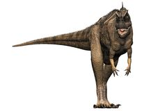 Ceratosaurus dinosaur challenging. Ceratosaurus dinosaur front view challenge pose. predator theropod, with a large head, short forelimbs, robust hind legs, and Stock Photos