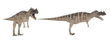 Ceratosaurus Isolato del dinosauro su bianco illustrazione di stock