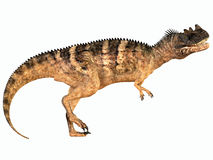 Ceratosaurus over White Royalty Free Stock Photography