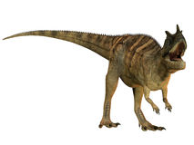 Ceratosaurus on White Stock Photography