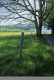 Cerca, árvore, estrada, mola Fotos de Stock Royalty Free