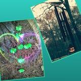 Cerca Foto de archivo libre de regalías