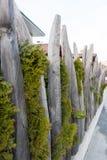 Cerca atípica da árvore em Kirchberg, Kitzbuhel, Áustria Foto de Stock