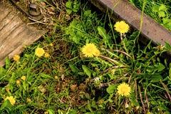 Cerca avariado com flores Fotografia de Stock