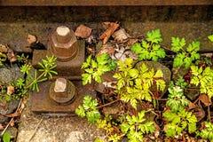 Cerca avariado com Roberts Geranium imagens de stock royalty free