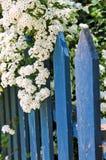 Cerca azul com flores brancas fotos de stock royalty free