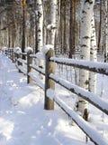 Cerca bajo nieve Foto de archivo libre de regalías