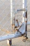 Cerca bloqueada de cadena Foto de archivo