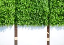Cerca branca com uma grama verde Imagens de Stock