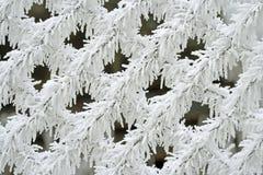 Cerca branca nevado Foto de Stock Royalty Free
