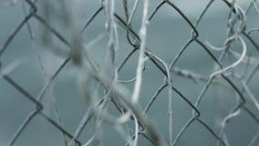 Cerca chain da rua com as hastes secas da planta Cerca da corrente da cerca da rede de arame da estrutura filme
