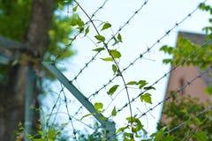 Cerca coberto de vegetação do arame farpado com construção obscura no fundo imagem de stock