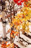 Cerca colorida do folha de outono e a de bambu, Narita, Japão Imagem de Stock