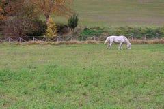 Cerca com cavalos Fotografia de Stock Royalty Free