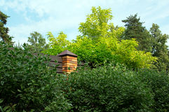 Cerca com o tijolo em torno das árvores e dos pinhos verdes do ficus de benjamin Foto de Stock Royalty Free