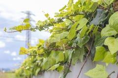 Cerca concreta com uma planta decorativa na parte superior fotografia de stock