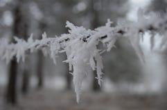 Cerca congelada Foto de archivo