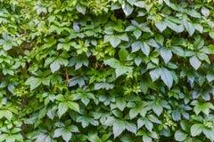 Cerca das folhas Imagem de Stock
