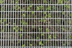 Cerca de acero de la malla de alambre delante de un arbusto verde Fotos de archivo libres de regalías