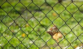 Cerca de alambre con las hojas otoñales Fotos de archivo