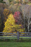Cerca de Autumn Trees y de carril partido fotos de archivo libres de regalías