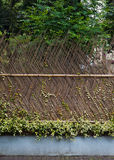 Cerca de bambú Imagen de archivo libre de regalías