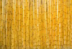 Cerca de bambú aislada Fotografía de archivo libre de regalías