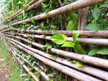 Cerca de bambú con la pequeña planta imagen de archivo