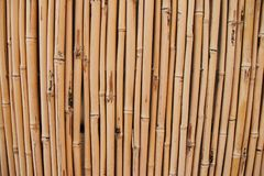 Cerca de bambú seca Foto de archivo libre de regalías