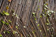 Cerca de bambu Imagem de Stock