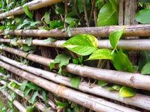 Cerca de bambu com planta pequena Fotos de Stock