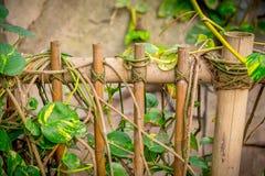 Cerca de bambu em um jardim zoológico fotografia de stock