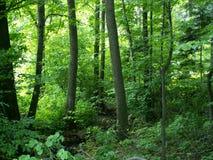 Cerca de bosque Imagenes de archivo
