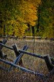 Cerca de carril con Cottonwoods Imagen de archivo libre de regalías