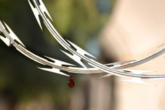 Cerca de fio afiada da lâmina com a gota da parede do sangue segura Foto de Stock